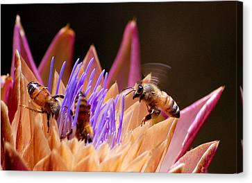 Canvas Print featuring the photograph Bees In The Artichoke by AJ  Schibig