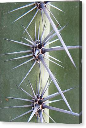 Canvas Print featuring the photograph Cactus Thorns by Deb Halloran