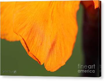 Canna Lily Named Wyoming Canvas Print by J McCombie