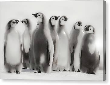 Cape Washington, Antarctica Canvas Print by Janet Muir