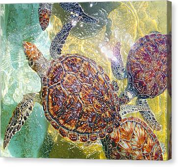 Cayman Turtles Canvas Print by Carey Chen