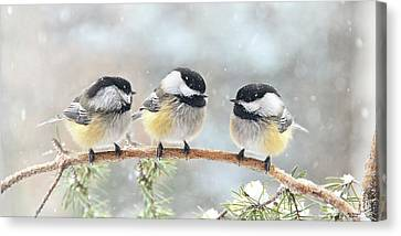 3 Chickadees On A Snowy Day Canvas Print
