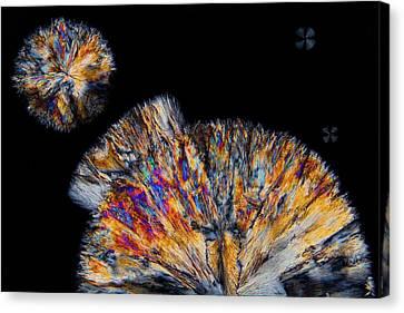 Cholesterol Crystals Canvas Print by Antonio Romero