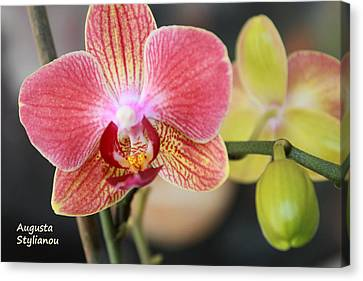 Colourful Orchid Canvas Print