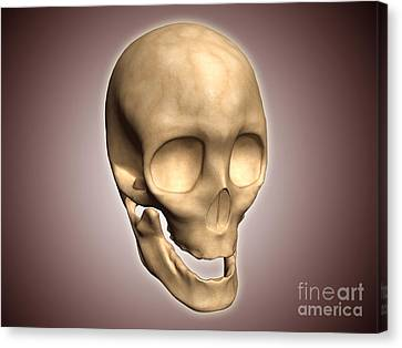 Conceptual Image Of Human Skull Canvas Print by Stocktrek Images