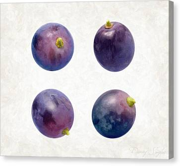 Concord Grapes Canvas Print by Danny Smythe