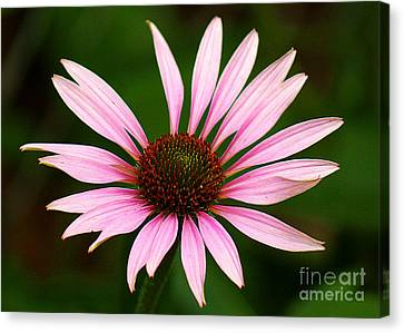 Canvas Print featuring the photograph Coneflower - Echinacea by Lisa L Silva