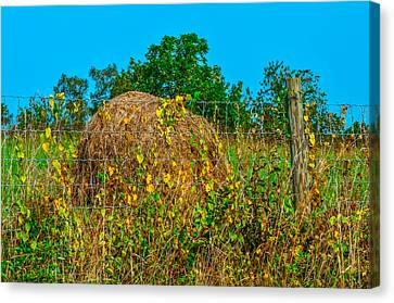 Country Fence Canvas Print by Brian Stevens