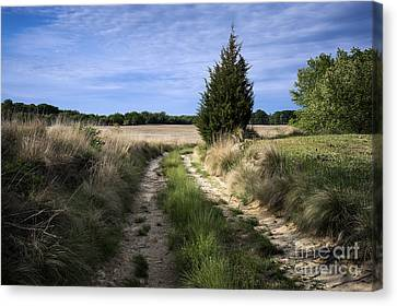 Country Road Canvas Print by John Greim