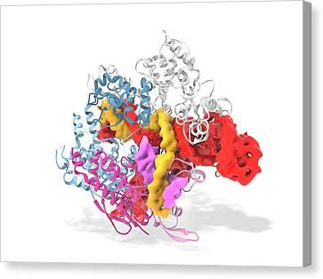 Crispr-cas9 Gene Editing Complex Canvas Print