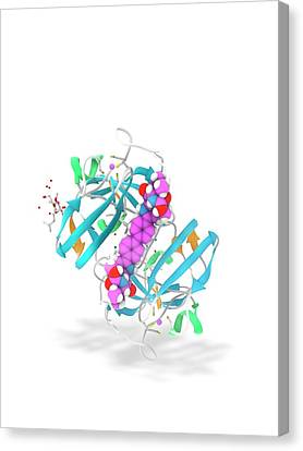 Daclatasvir And Ns5a Protein Complex Canvas Print by Ramon Andrade 3dciencia