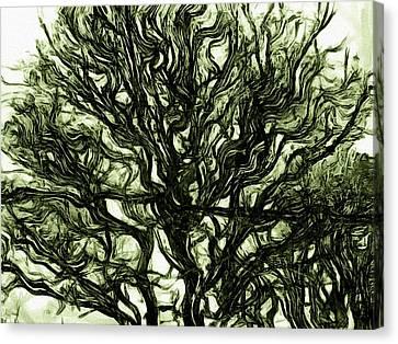 Dark Nature Canvas Print
