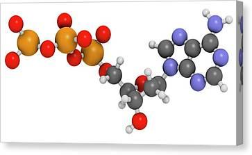 Deoxyadenosine Triphosphate Molecule Canvas Print by Molekuul