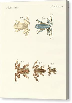 Different Kinds Of Foreign Tree Frogs Canvas Print by Splendid Art Prints
