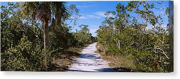 Dirt Road Passing Through A Forest Canvas Print by Panoramic Images