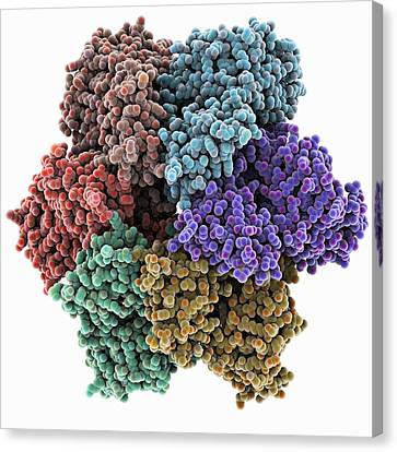 Dna Helicase Molecule Canvas Print by Science Photo Library
