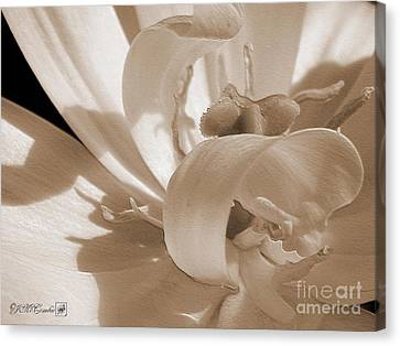 Double Late Tulip Named Angelique Canvas Print