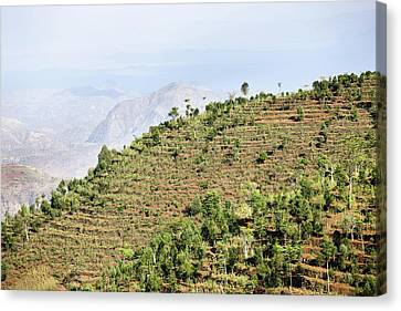 Dry Farming On Terraces In The Steep Canvas Print by Martin Zwick