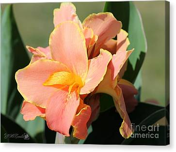 Dwarf Canna Lily Named Corsica Canvas Print by J McCombie