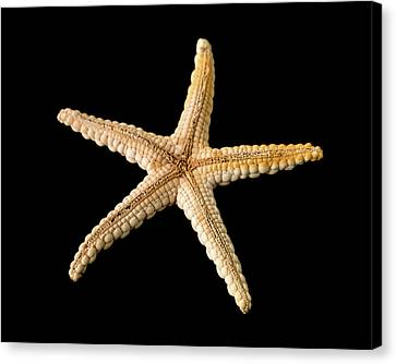 Elegant Starfish Canvas Print by Natural History Museum, London