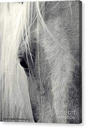 Equine Study Canvas Print by Laurinda Bowling