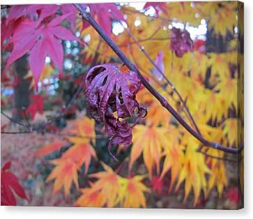 Fall Splendor  Canvas Print by Valia Bradshaw