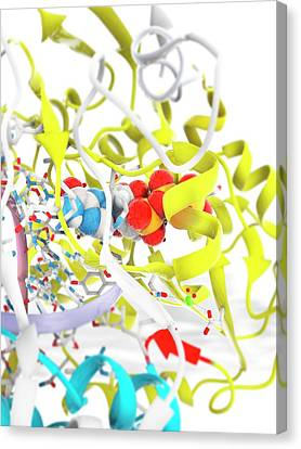 Foot-and-mouth Disease Virus Drug Complex Canvas Print by Ramon Andrade 3dciencia