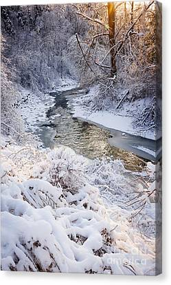 Sunflare Canvas Print - Forest Creek After Winter Storm by Elena Elisseeva