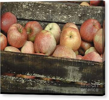 French Market Apples Canvas Print by Catherine Fenner