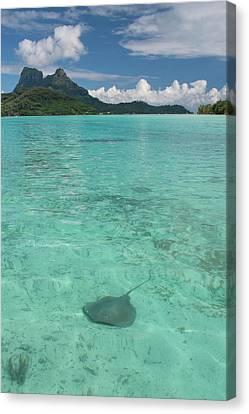Oceania Canvas Print - French Polynesia, Society Islands by Cindy Miller Hopkins