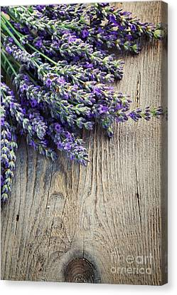 Fresh Lavender Canvas Print by Mythja  Photography