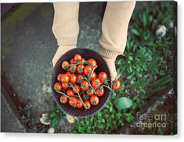 Fresh Tomatoes Canvas Print by Mythja  Photography