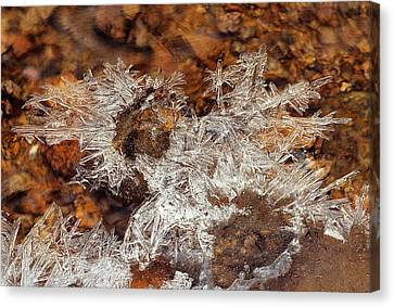 Frozen Beauty Aka Ice Is Nice Viii Canvas Print by Bijan Pirnia