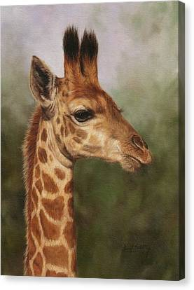 Giraffe Canvas Print by David Stribbling