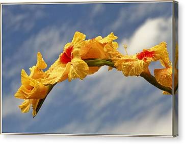 Seed Beads Canvas Print - Gladiolas by Geraldine Scull
