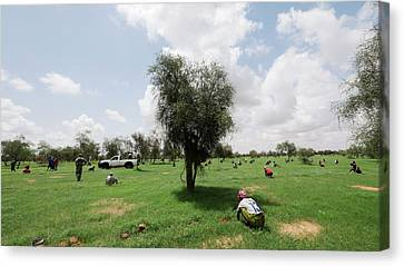 Senegal Canvas Print - Great Green Wall Construction by Thierry Berrod, Mona Lisa Production
