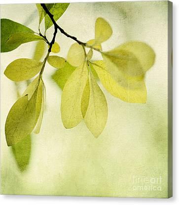 Green Foliage Series Canvas Print by Priska Wettstein