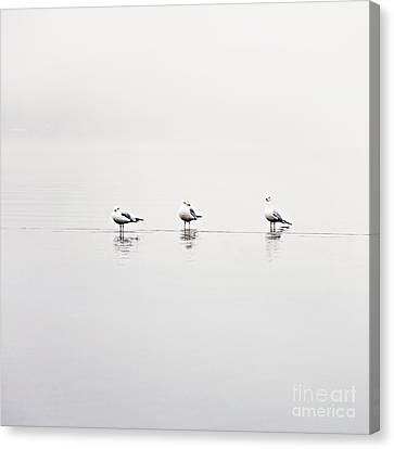 3 Gulls Canvas Print by Sylvia Cook