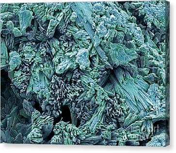 Gypsum Crystals, Sem Canvas Print by Steve Gschmeissner
