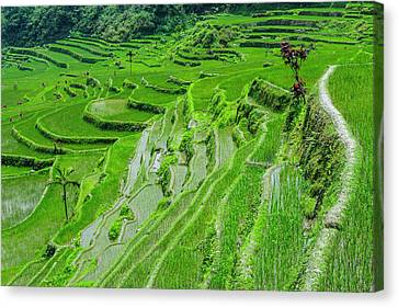 Hapao Rice Terraces, Part Of The World Canvas Print by Michael Runkel