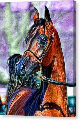 Superb Stallion Canvas Print by Bruce Nutting