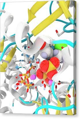 Hepatitis C Polymerase Enzyme Molecule Canvas Print by Ramon Andrade 3dciencia