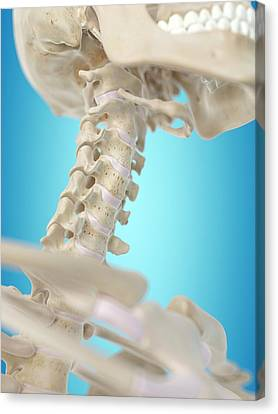 Human Cervical Spine Canvas Print by Sciepro