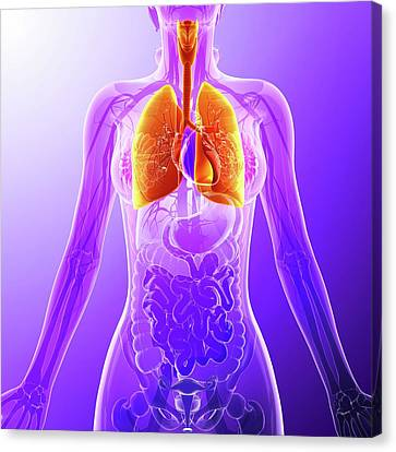 Human Lungs Canvas Print by Pixologicstudio