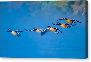 Incoming Geese Canvas Print