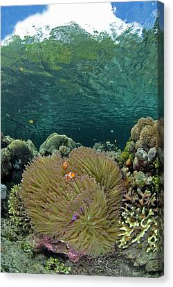 Indian Ocean, Indonesia, Raja Ampat Canvas Print by Jaynes Gallery