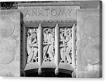 Indiana University Myers Hall Anatomy Canvas Print