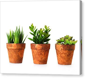 3 Indoor Plants Canvas Print by Boon Mee