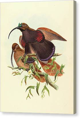 John Gould And W Canvas Print