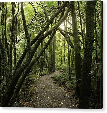 Jungle Trail Canvas Print by Les Cunliffe